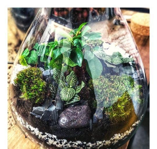 5 conseils indispensables à connaitre pour entretenir son terrarium tropical ou fermé