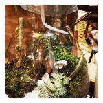 5 conseils pour prendre soin de son terrarium tropical.