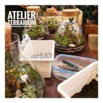 Apprendre à faire soi-même son propre terrarium de plantes