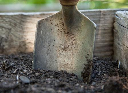 7 gestes indispensables pour des plantes d'intérieur en bonne santé