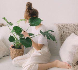 7 conseils d'entretien pour des plantes d'intérieur en bonne santé