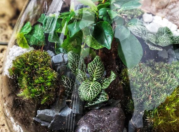 Pourquoi proposer un atelier terrarium pour vos team building ?