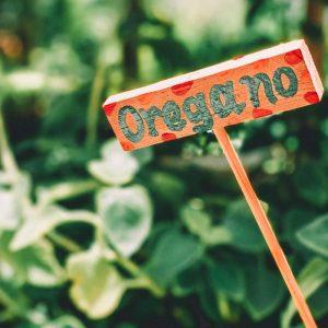 Origan, plante aromatique indispensable à avoir au balcon si vous êtes fan de la cuisine italienne