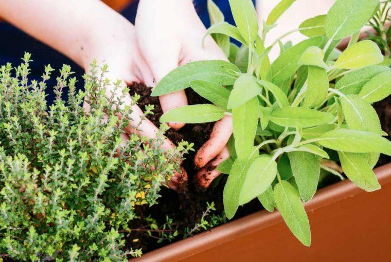 4 herbes aromatiques à planter ensemble au balcon