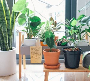 Décorer son intérieur avec des plantes