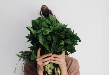 comment prendre soin du basilic en pot