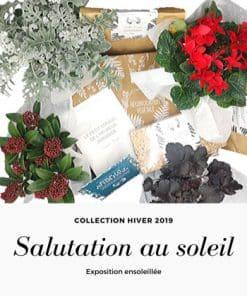 Box de jardinage Hiver 2019 Exposition ensoleillée
