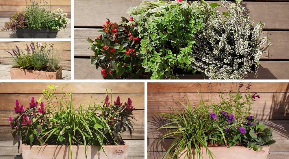 Exemple de jardinière de plantes ornementales pour balcon terrasse et rebords de fenêtre