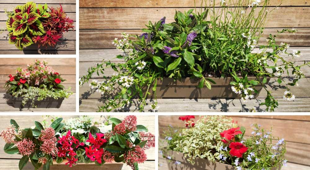 Exemple de jardinière de plantes de saison pour balcon terrasse et rebords de fenêtre