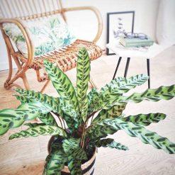 Plante verte tropicale