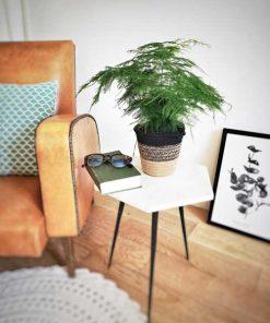 Aspargus plumosus et son cache pot en corde naturelle
