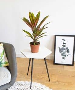 palmier d'intérieur original