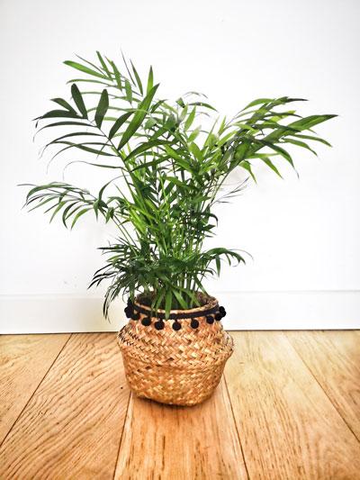 Lot De 4 Plantes Depolluantes Reconciliation Vegetale