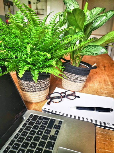 Lot de 2 plantes vertes dépolluante pour assainir l'air même au bureau. A offrir ou à s'offrir.