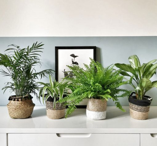 Lot de 4 plantes vertes dépolluantes pour la maison