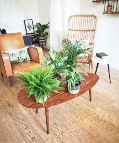 Chlorophytum, Chamaedorea, Aglaonema, Fougère de boston, 4 plantes dépolluantes pour la maison
