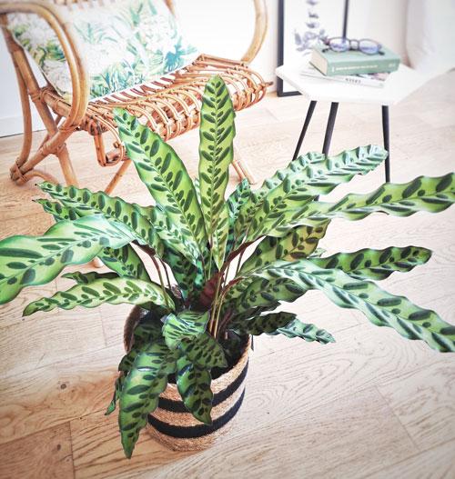 Plante verte intérieur