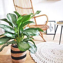 Plante pour intérieur sombre
