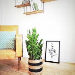 Plante facile d'entretien