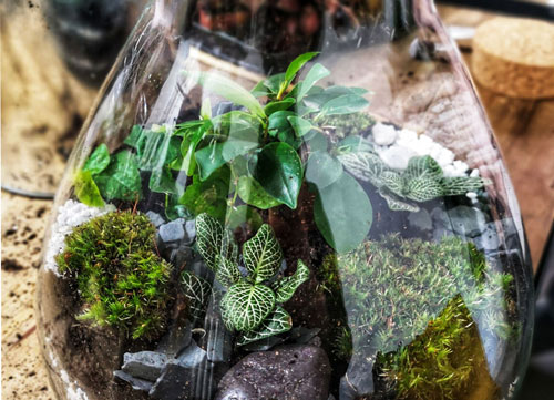 Atelier terrarium à paris et ile de france