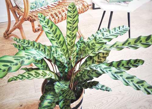 Plantes vertes dépolluantes tropicales spéciales suspension