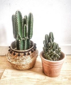 Lot de 2 cactus anti radiation