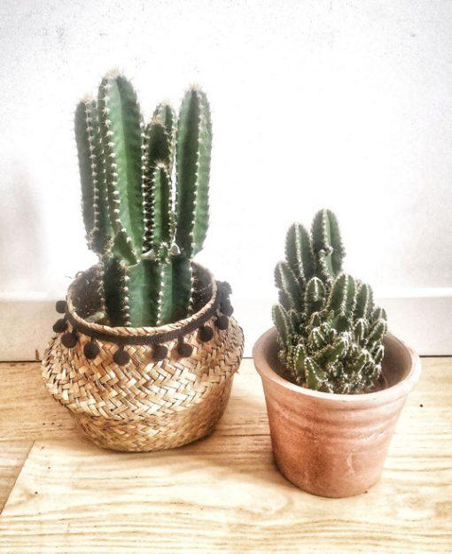 Lot de 2 cactus anti radiation
