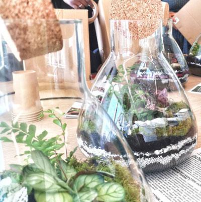 Team building et atelier terrarium