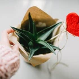 Saint valentin offre spéciale