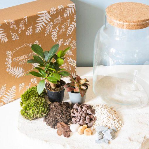 Kit terrarium tout compris 2 plantes