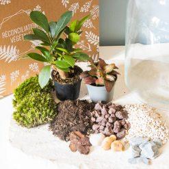 Kit terrarium à faire soi-même