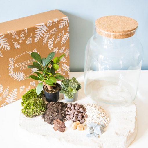 Kit terrarium DIY 2 plantes