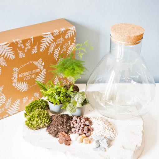 Kit terrarium humide DIY
