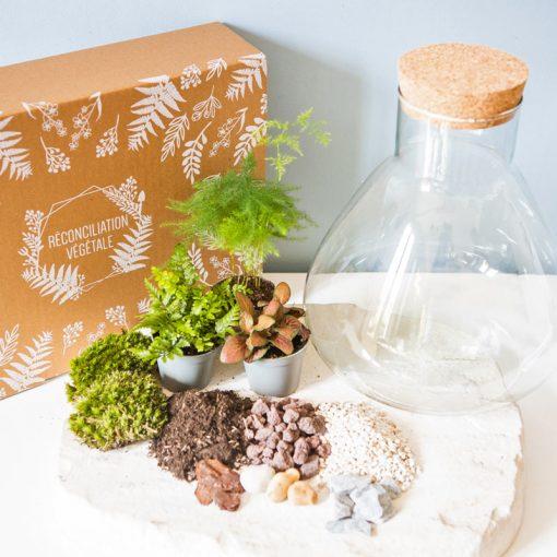 Kit DIY pour terrarium humide 3 plantes