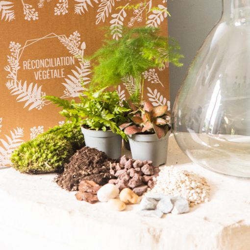 Plantes et kit terrarium