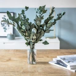 fleurs séchées eucalyptus cinerea