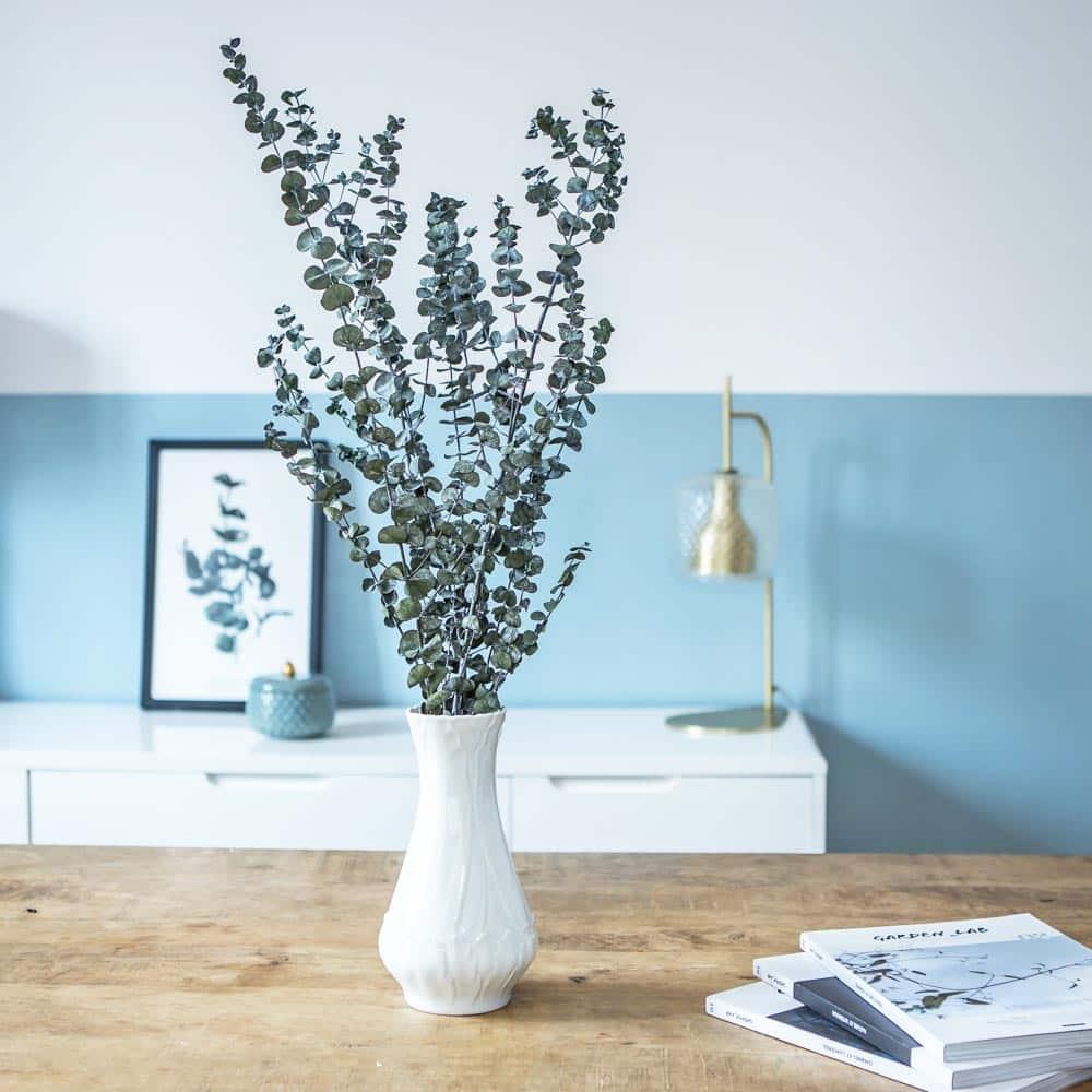 fleurs séchées eucalyptus