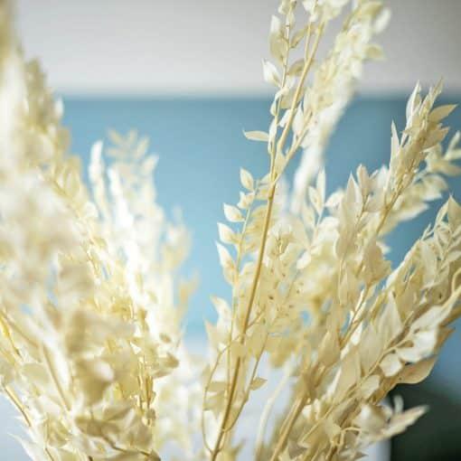 feuille de ruscus blanc sec
