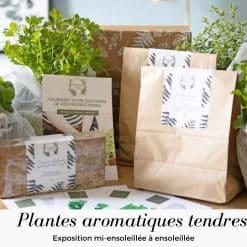 kit plantes aromatiques tendres pour jardinières