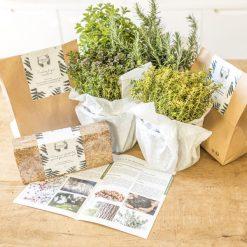 kit de jardinage plante aromatique
