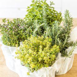 herbes aromatiques spéciales balcon