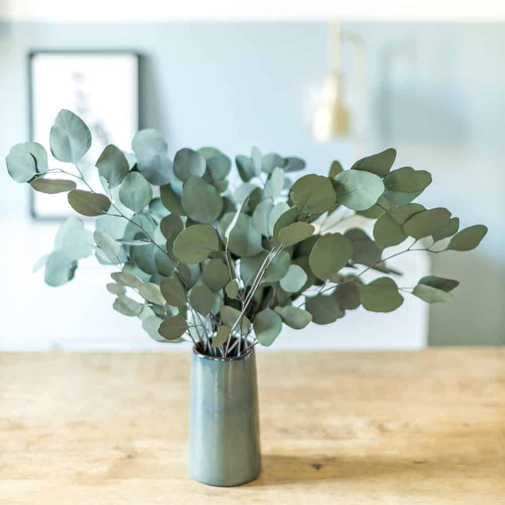 Bouquet de fleurs séchées eucalyptus